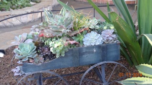 One part of Old Town had display after display of succulents and cactus, got all kinds of ideas.